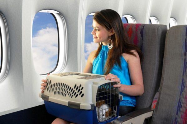 Как путешествовать с животными 2