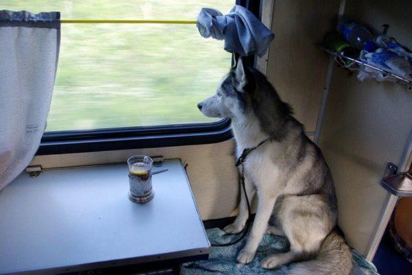 Как путешествовать с животными 1