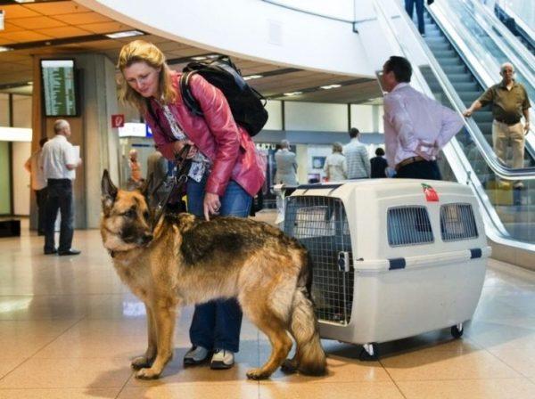 Как путешествовать с животными 4