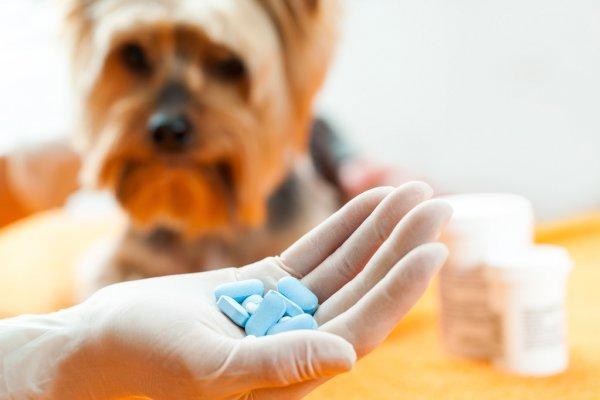 Ветеринарный кардиотонический препарат для собак Ветмедин