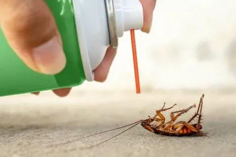 Как избавиться от тараканов 2