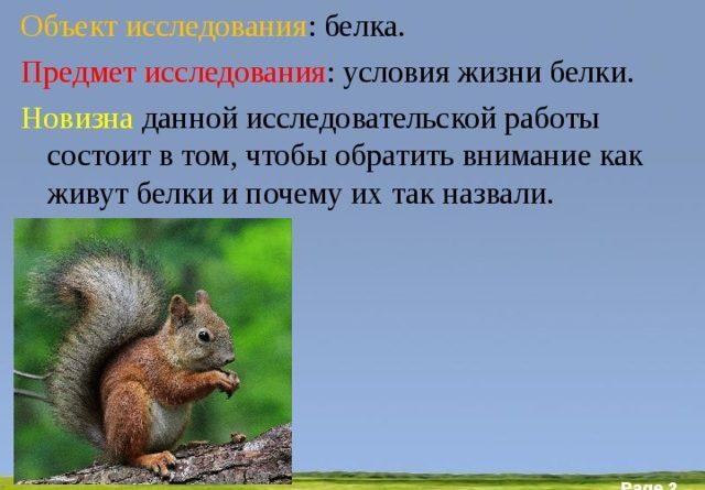 issledovatelskaja-rabota-obuchajushhihsja-pochemu-zverka-nazvali-belkoj-2