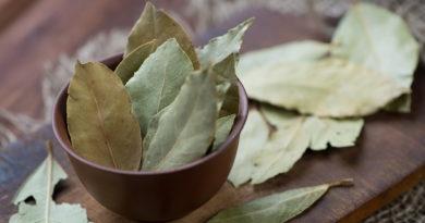 lavrovyj-list-lechebnye-svojstva-i-protivopokazanija-2