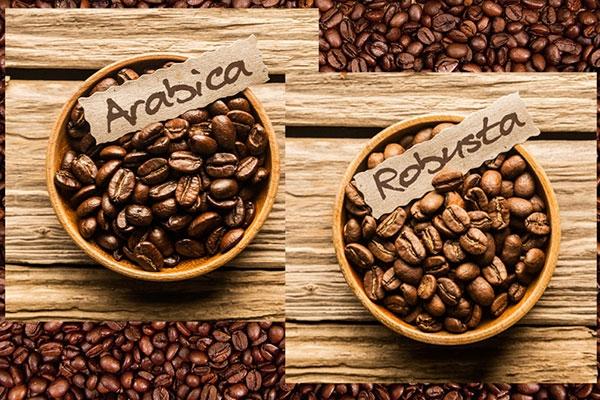 Арабика или робуста какой кофе выбрать
