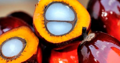 palmovoe-maslo-vred-kotoryj-nelzja-nedoocenivat-2