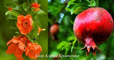 polza-i-vred-granata-dlja-zdorovja-12-lechebnyh-svojstv-a-takzhe-protivopokazanija-2