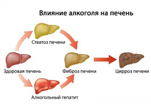 vosstanovlenie-pecheni-posle-alkogolja-vlijanie-alkogolja-na-pechen-2